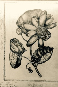 erican Wildflower